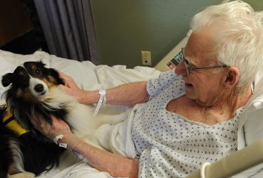 Therapy dog at Langley Hostpital