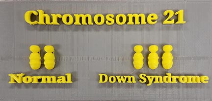 chromosomes_finished