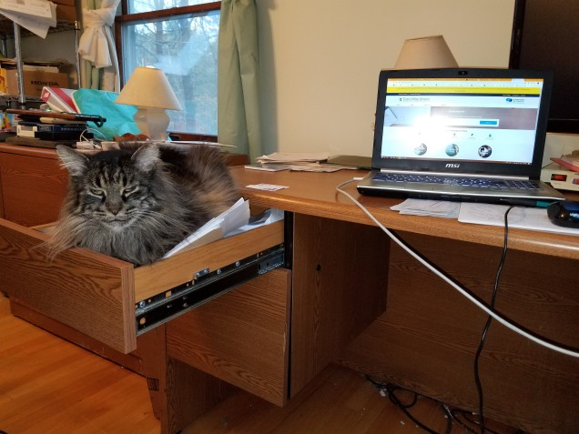 a cat sitting in a desk drawer and looking at the camera